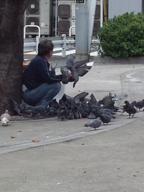 鳩おじさん